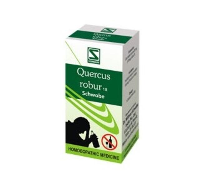 quercus robur 1x
